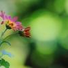 心に 花を 咲かせましょう ♪