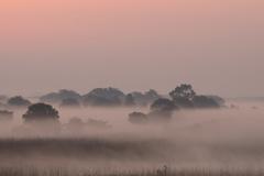 朝靄に包まれる渡良瀬遊水地