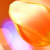 オレンジ色のなかで