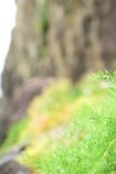 雨上がりの水草