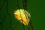 クラゲと網