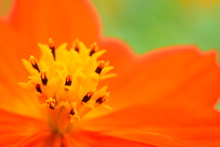 花びらの中の花束