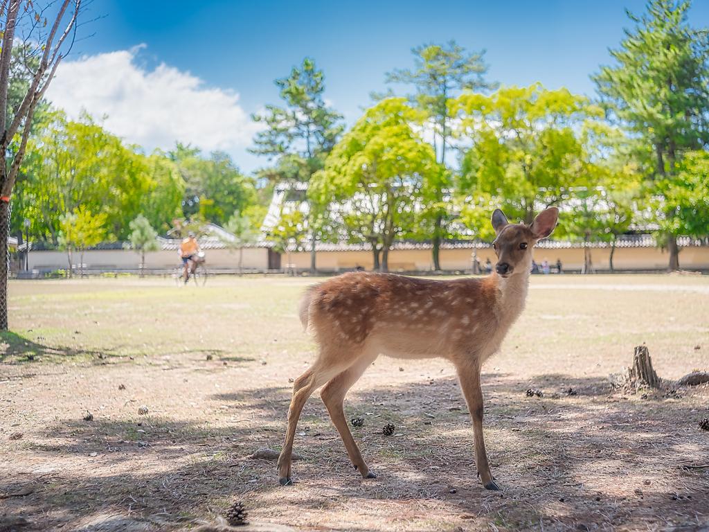 Nara le classique