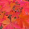 今年の紅葉も…