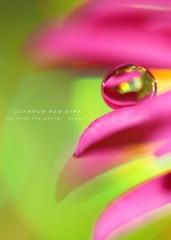 drop*