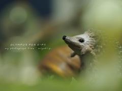 森の中のハリネズミ*