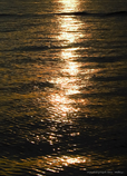 黄金の光*