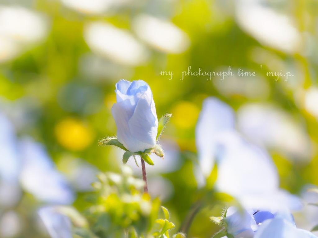 もうすぐ咲くから待っててね*