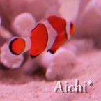 Aichi*
