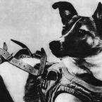 ライカ犬 R.SHIGE