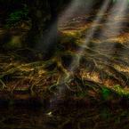 生命の樹  - 再生 -
