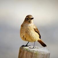 可愛い小鳥たち 5