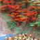 ブリックミュージアム「箕面の滝」