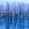 青い池 凍結前