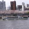 遊覧船と隅田公園