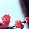 府中市郷土の森【梅の花:八重寒紅】20210116