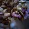萎れの美 紫陽花