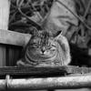 猫 ~ギャラリ~