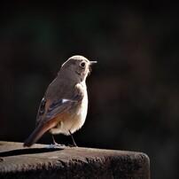 可愛い小鳥たち 4