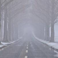 マキノメタセコイア並木道雪景