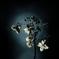 花の記憶 ~枯れ紫陽花~ 其の五