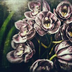 エイリアン植物