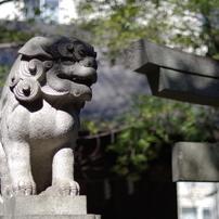 狛犬_赤坂氷川神社