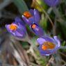 春の目覚め DSC_8537
