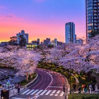 東京ミッドタウンの夕焼け夜桜