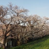 多摩川河川敷(川崎側)