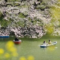spring for tokyoites 2021