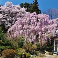 穏やかな春の日に・・・