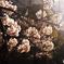 今年の桜はこんなでした----①