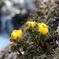 春を告げる植物