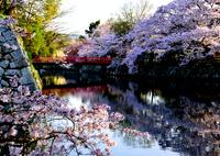 姫路城 お濠と桜