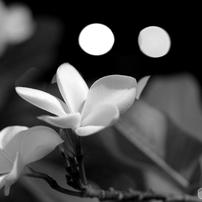 「花」無彩色の世界