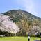 足立公園2021 3月 小文字山と桜