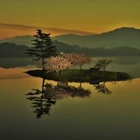 夜明けの小島桜