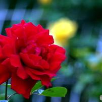 「花 」彩