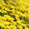 花音痴でも花を撮る 21―①