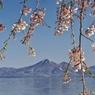 磐梯山としだれ桜