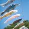 日本の日常 泳ぐ鯉