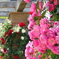 横浜 Rose Week-259