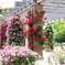 横浜 Rose Week-262