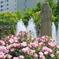 横浜 Rose Week-263