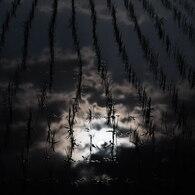 田植えの夜