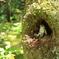 木のうろを見つけたアズマくん