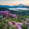 紫陽花咲く風景 2