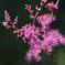 木陰に咲く  DSC_9325