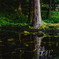 池を舞うゲンジと姫